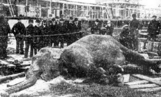 Эдисон убил слона